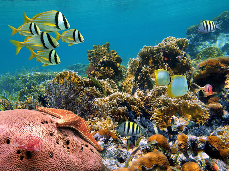 Enjoy HP Reef Maldives Tour with TripDezire for booking call at 999 111 9350