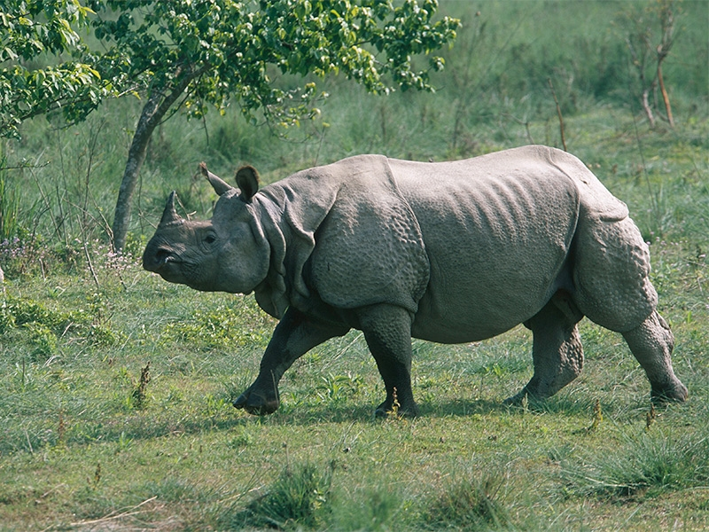 Manas National Park, Assam tour with TripDezire