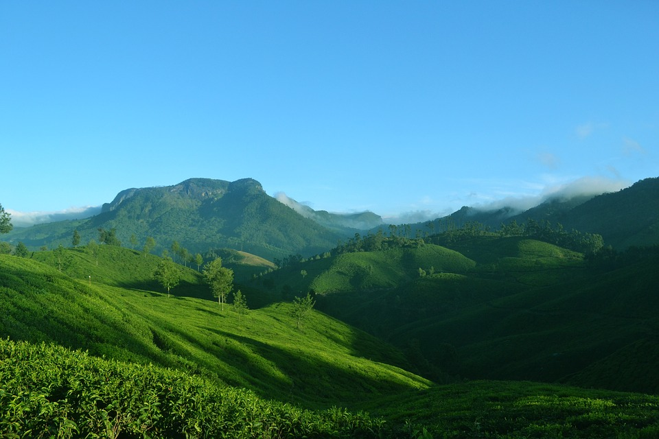 Munnar tour with TripDezire for booking call at 999 111 9350