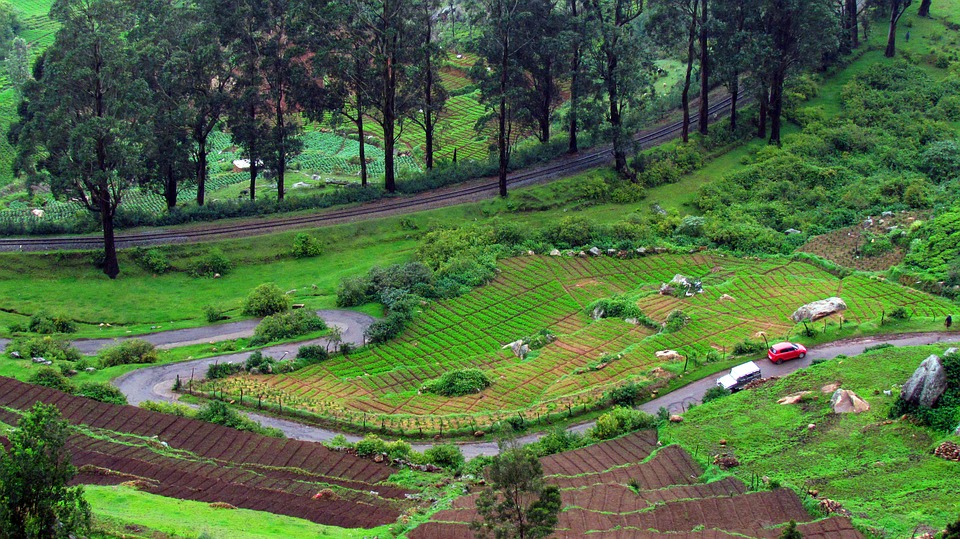 Ooty tour with TripDezire