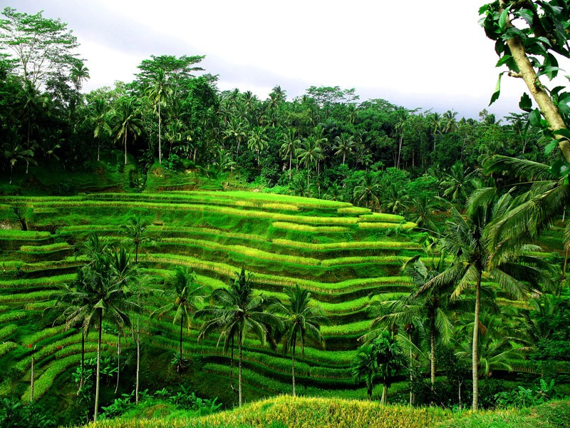 Ubud - Bali Tour with TripDezire for booking call at 999 111 9350