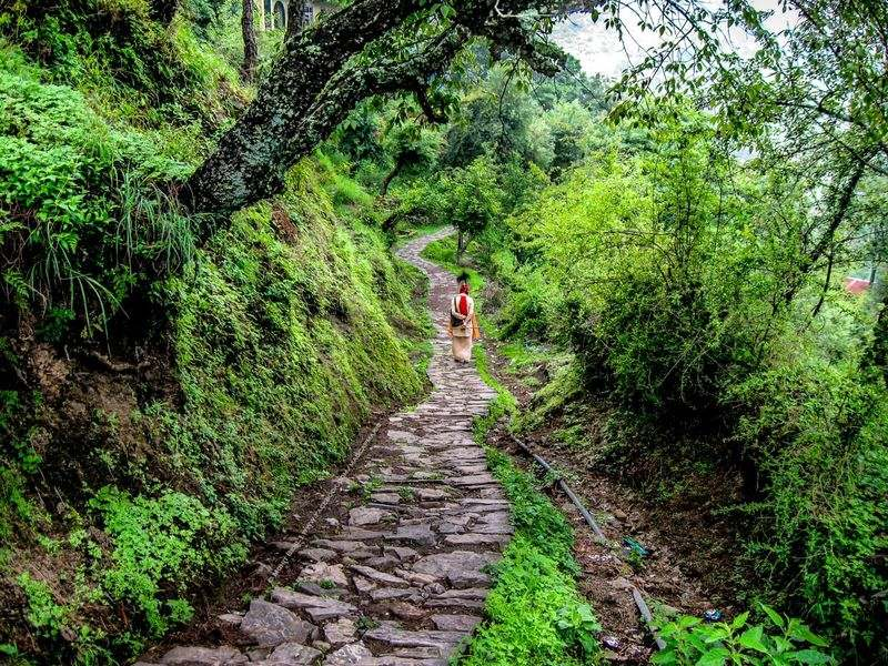 Gilbert Trail - Best Places to visit in Kasauli