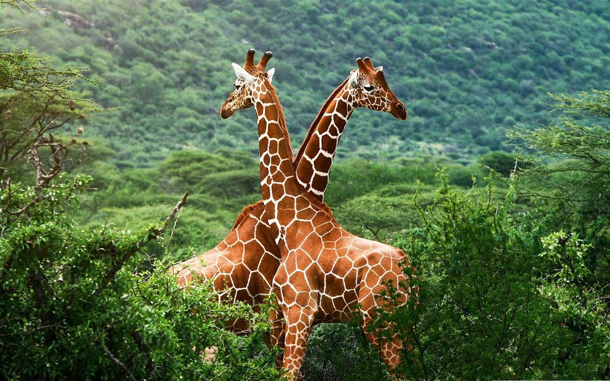 Top Places to enjoy wildlife safari in India