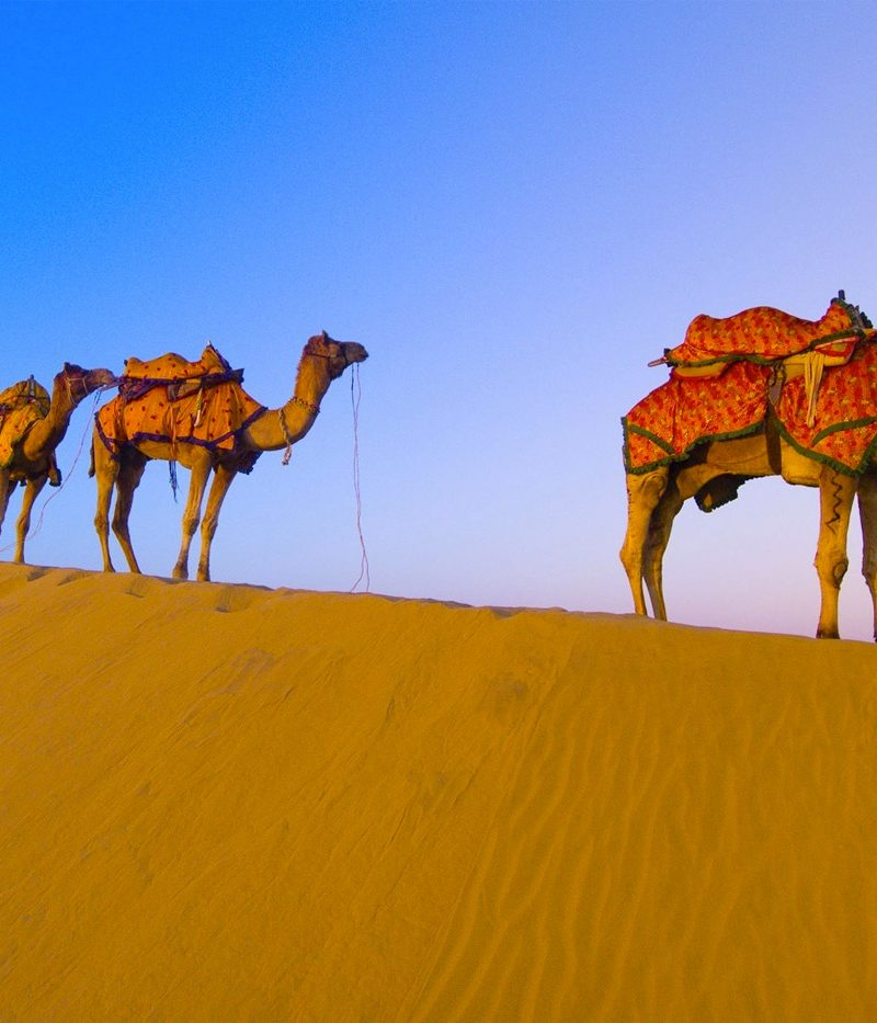 Desert Safari in Rajasthan and Dubai with TripDezire